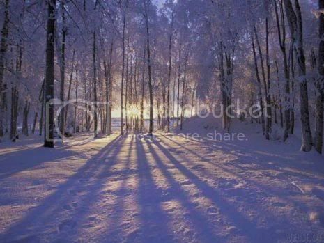 winter Pictures, Images and Photos